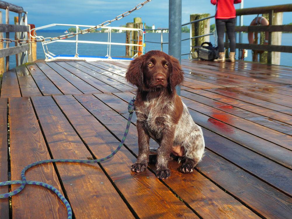 Grunderziehung - Ausflug auf dem Schiff