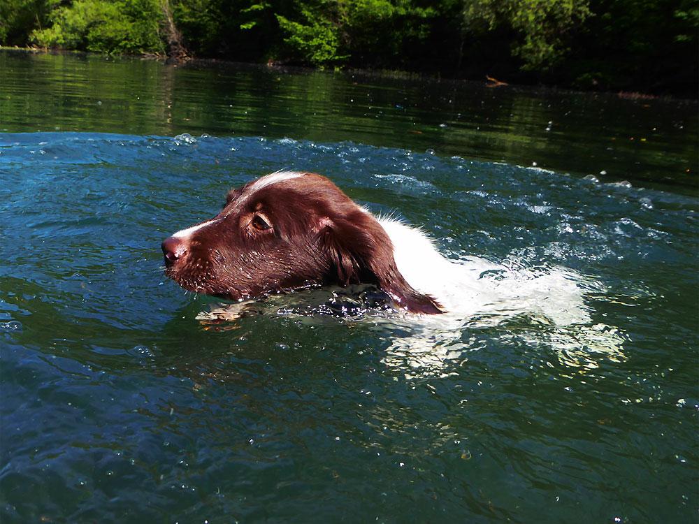 Welpen Schwimmstunde